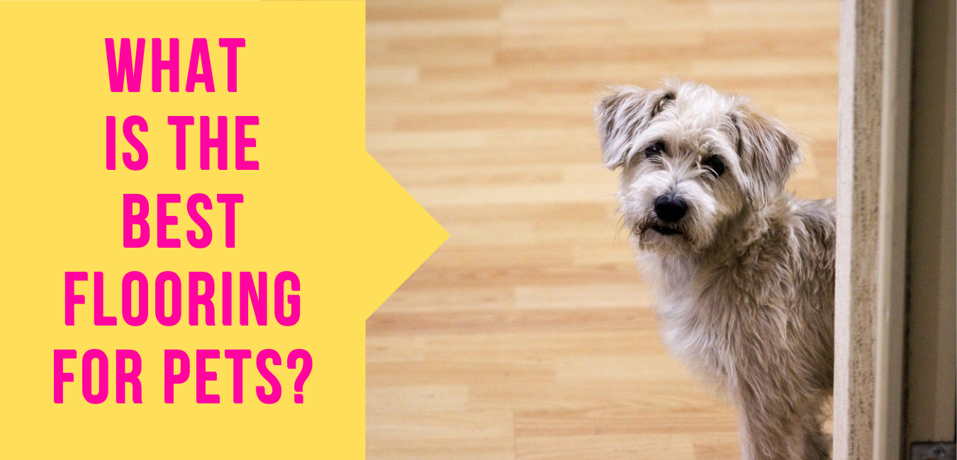 What is the Best Flooring for pets?